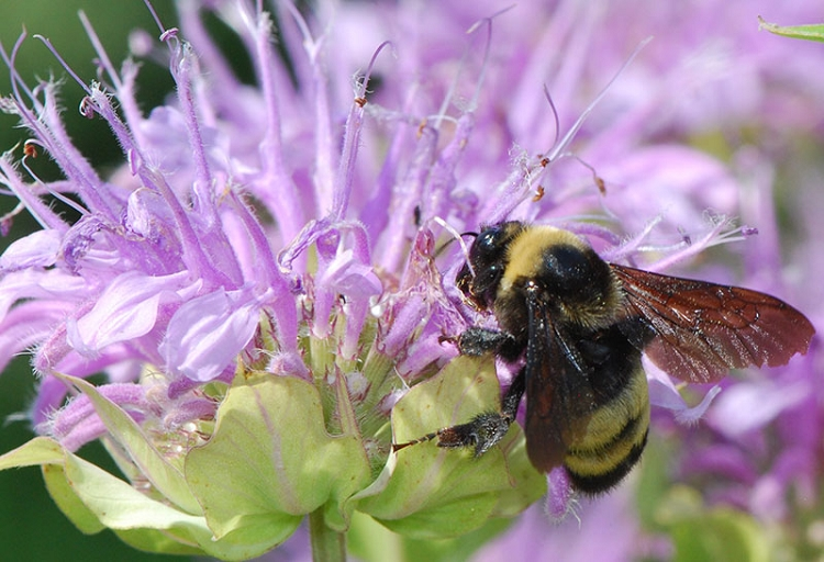 Home Wildflowers Bee Plants Group Of 10